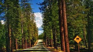 Sequoia NP 1